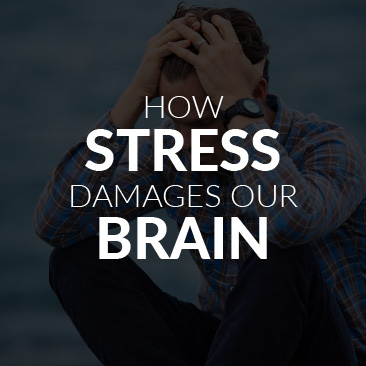 How Stress Damages Our Brain